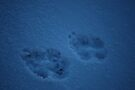 Forgotten footsteps by Brenden Bencharski