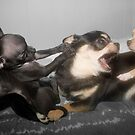 """""""Friendly Frolic?"""" - or is it a dog eat dog world? by John Hartung"""