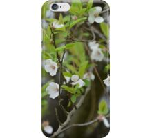 FIRST BLOSSOMS iPhone Case/Skin