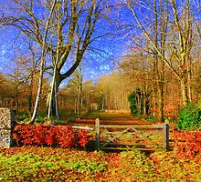 Lonely Gate by Karen Martin