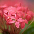 So pink by Kornrawiee