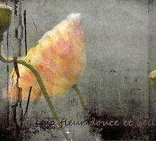belle fleur by Clare Colins