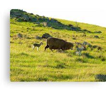 New born lambs Canvas Print