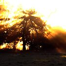 - Rays of sun on Bridge Farm by Christopher Cullen