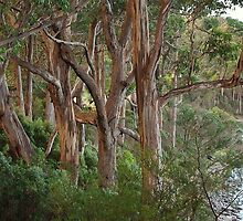 Wooded view - Eaglehawk Neck by imaginethis