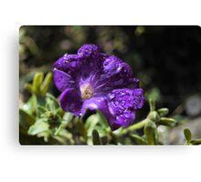 Deep purple flower Canvas Print