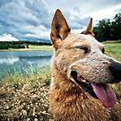 ...a dog's life... by Geoffrey Dunn