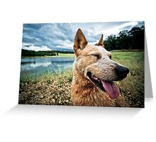 ...a dog's life... Greeting Card