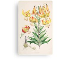 A Monograph of the Genus Lilium Henry John Elwes Illustrations W H Fitch 1880 0115 Canvas Print