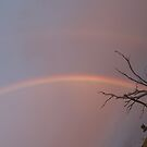 Rainbow Tree by Carol Field
