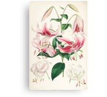 A Monograph of the Genus Lilium Henry John Elwes Illustrations W H Fitch 1880 0159 Canvas Print