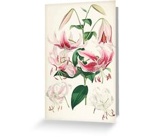 A Monograph of the Genus Lilium Henry John Elwes Illustrations W H Fitch 1880 0159 Greeting Card