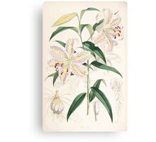 A Monograph of the Genus Lilium Henry John Elwes Illustrations W H Fitch 1880 0167 Canvas Print