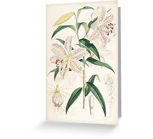 A Monograph of the Genus Lilium Henry John Elwes Illustrations W H Fitch 1880 0167 Greeting Card