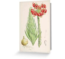 A Monograph of the Genus Lilium Henry John Elwes Illustrations W H Fitch 1880 0093 Greeting Card