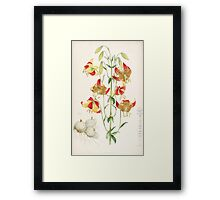 A Monograph of the Genus Lilium Henry John Elwes Illustrations W H Fitch 1880 0215 Framed Print