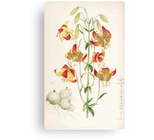 A Monograph of the Genus Lilium Henry John Elwes Illustrations W H Fitch 1880 0215 Canvas Print
