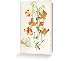 A Monograph of the Genus Lilium Henry John Elwes Illustrations W H Fitch 1880 0215 Greeting Card