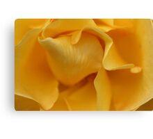 Beautiful Curves - Yellow Rose Canvas Print