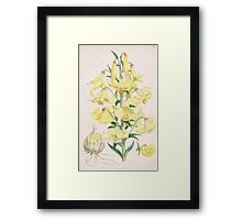 A Monograph of the Genus Lilium Henry John Elwes Illustrations W H Fitch 1880 0101 Framed Print