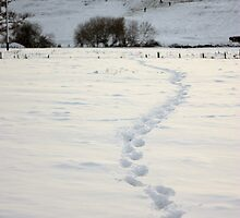 Winding footprints in the snow - Romsey by Peter Wells