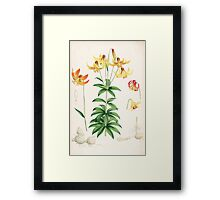 A Monograph of the Genus Lilium Henry John Elwes Illustrations W H Fitch 1880 0163 Framed Print