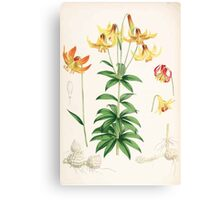 A Monograph of the Genus Lilium Henry John Elwes Illustrations W H Fitch 1880 0163 Canvas Print