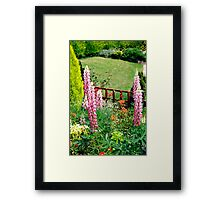 Pink Lupin flowers in a garden Framed Print