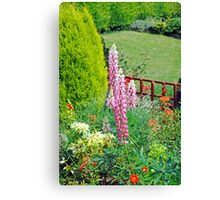 Pink Lupin flowers in a garden Canvas Print