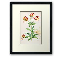 A Monograph of the Genus Lilium Henry John Elwes Illustrations W H Fitch 1880 0135 Framed Print
