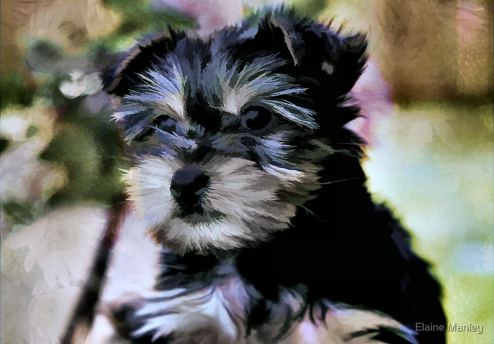 Puppy Face  by Elaine  Manley
