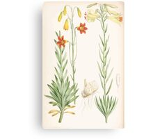 A Monograph of the Genus Lilium Henry John Elwes Illustrations W H Fitch 1880 0209 Canvas Print