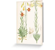 A Monograph of the Genus Lilium Henry John Elwes Illustrations W H Fitch 1880 0209 Greeting Card