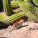Cactus and Chipmunk - Phoenix, AZ by Peggy Berger