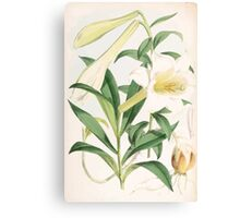 A Monograph of the Genus Lilium Henry John Elwes Illustrations W H Fitch 1880 0131 Canvas Print