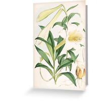 A Monograph of the Genus Lilium Henry John Elwes Illustrations W H Fitch 1880 0131 Greeting Card