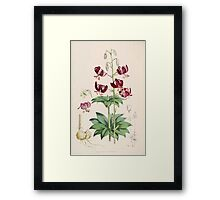 A Monograph of the Genus Lilium Henry John Elwes Illustrations W H Fitch 1880 0111 Framed Print