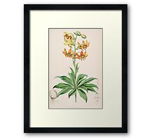 A Monograph of the Genus Lilium Henry John Elwes Illustrations W H Fitch 1880 0035 Framed Print