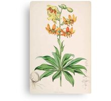 A Monograph of the Genus Lilium Henry John Elwes Illustrations W H Fitch 1880 0035 Canvas Print