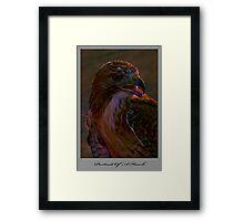 Portrait Of A Hawk Framed Print