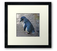 Adorable Blue Penguin Framed Print