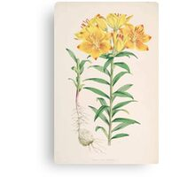 A Monograph of the Genus Lilium Henry John Elwes Illustrations W H Fitch 1880 0077 Canvas Print