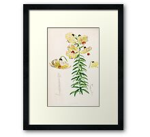 A Monograph of the Genus Lilium Henry John Elwes Illustrations W H Fitch 1880 0103 Framed Print
