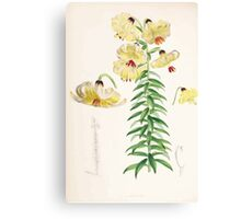 A Monograph of the Genus Lilium Henry John Elwes Illustrations W H Fitch 1880 0103 Canvas Print