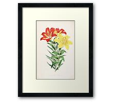 A Monograph of the Genus Lilium Henry John Elwes Illustrations W H Fitch 1880 0175 Framed Print