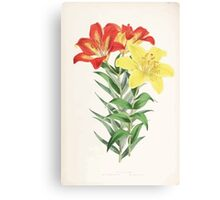 A Monograph of the Genus Lilium Henry John Elwes Illustrations W H Fitch 1880 0175 Canvas Print