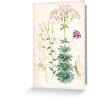 A Monograph of the Genus Lilium Henry John Elwes Illustrations W H Fitch 1880 0187 Greeting Card