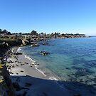 Pacific Grove, CA Shoreline by Sandra Gray