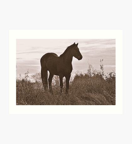 Equine Observer Art Print