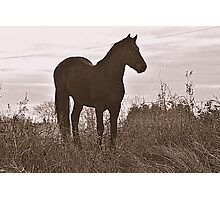 Equine Observer Photographic Print